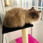 Cloud Ten Cat Hotel - Bampton, Oxfordshire